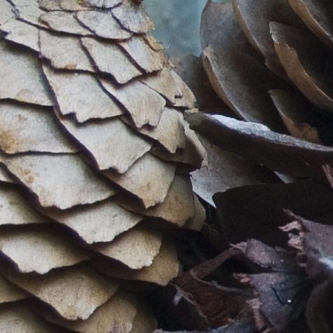 cones crop1