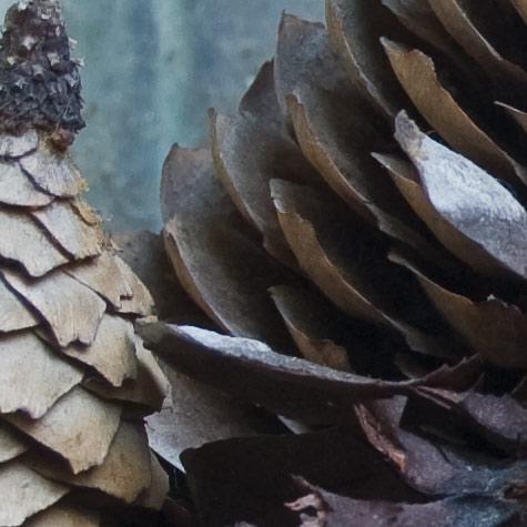 cones crop3