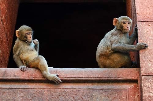 young-monkeys.jpg