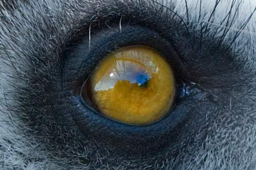 The Eye Of What Animal?