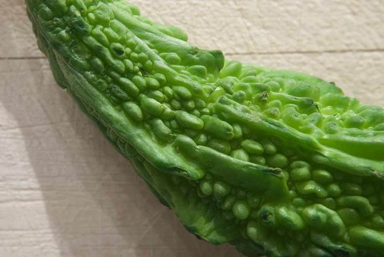 close up of a kerala or bitter melon