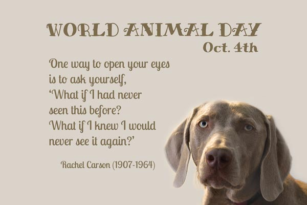 World Animal Day Poster With Dog