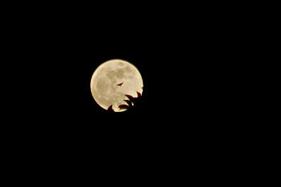 moon-crop