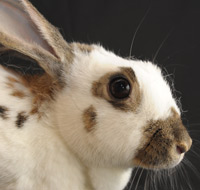 rabbit-profile-photo