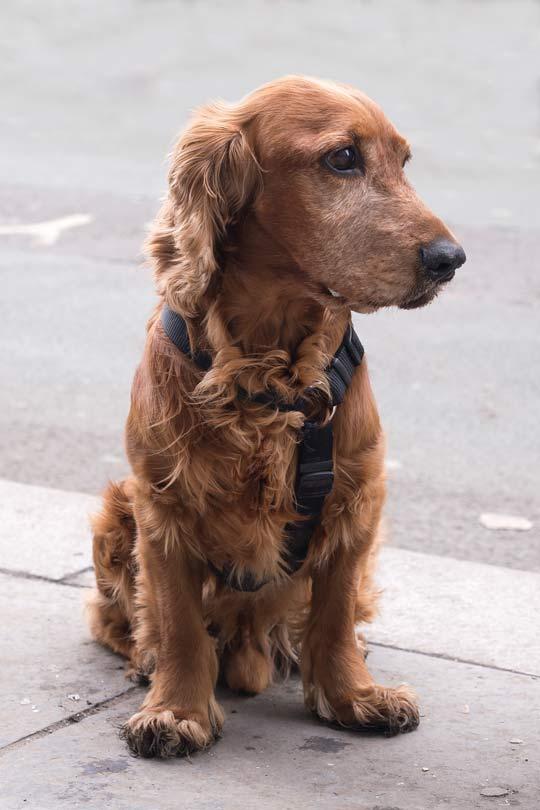 dog-after