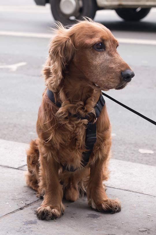 dog-before
