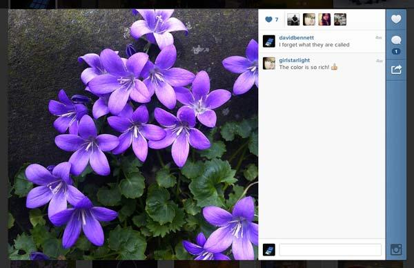instagram-david-bennett