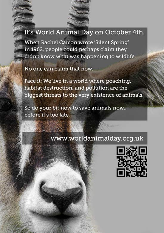 The front of the Roan Antelope card we made to support World Animal Day