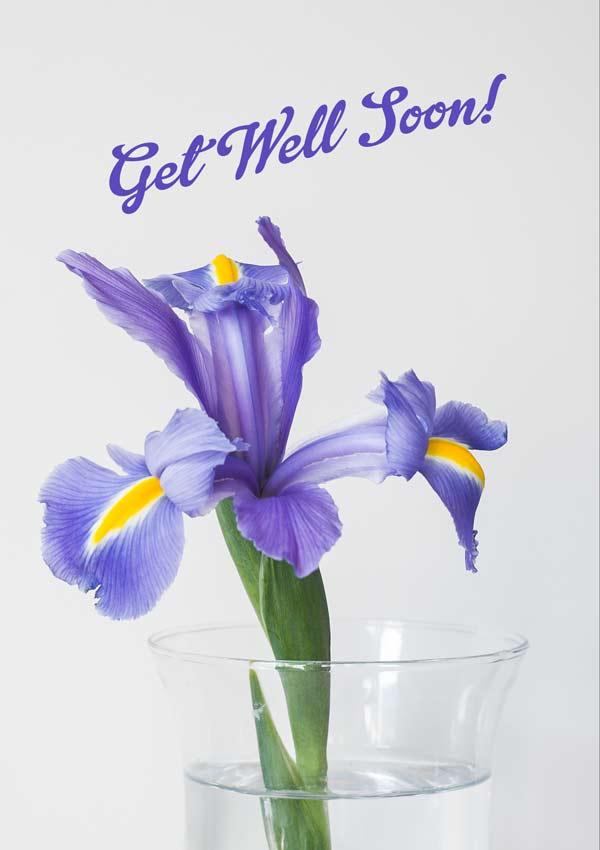 Get Well Iris