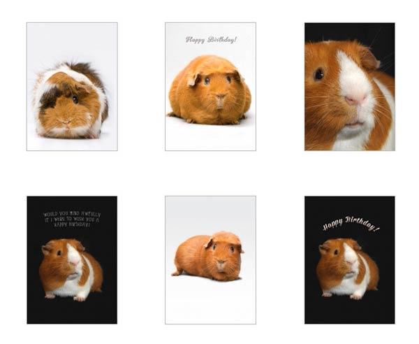 Guinea Pig Greeting Cards