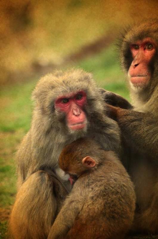 monkeys-01