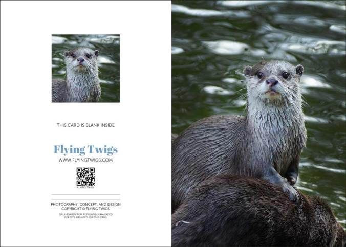 flying-twigs-greeting-card-otterly-delightful