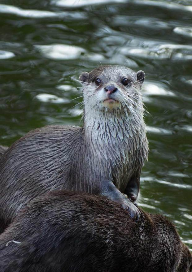 otterly-delightful