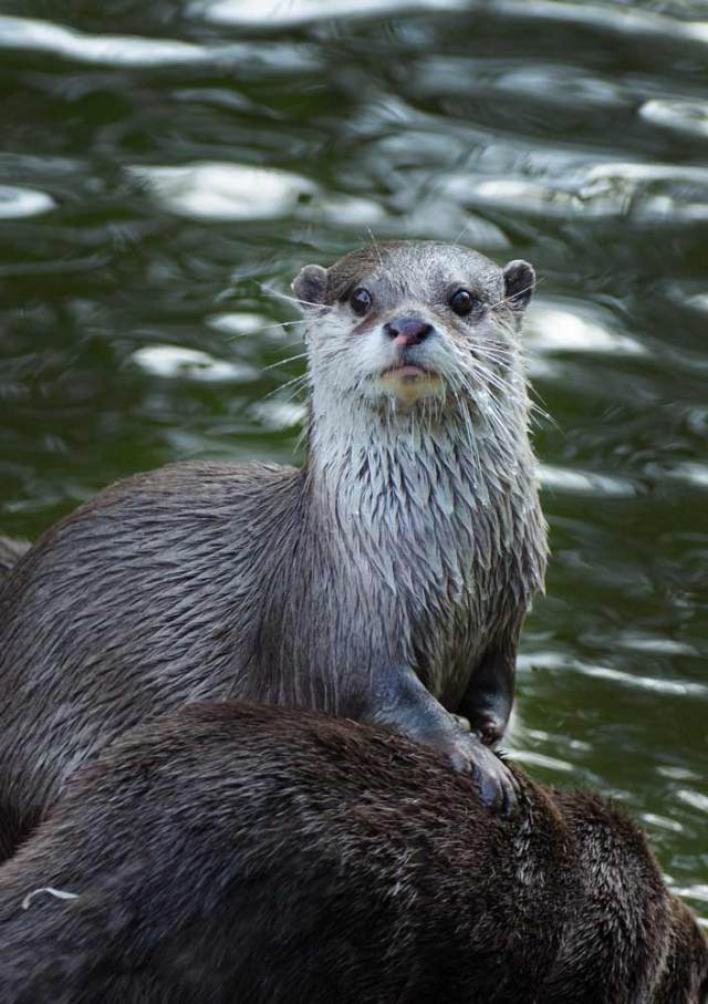 otterly-delightful