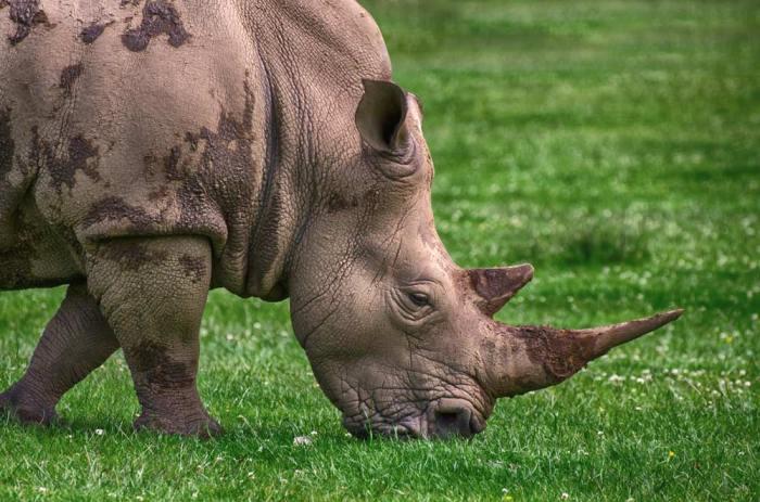 rhino-db