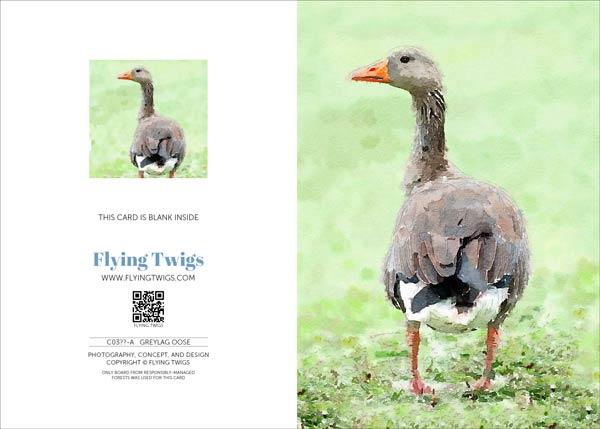 greylag-goose-greeting-card