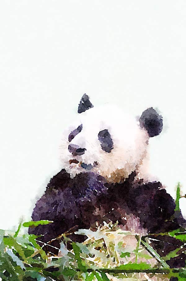 panda-thinking
