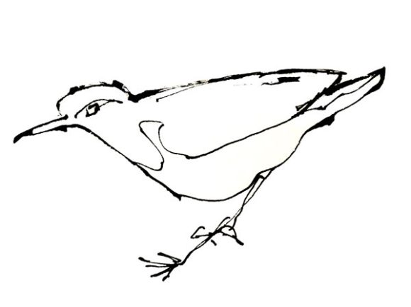 bird-sketch-close-up