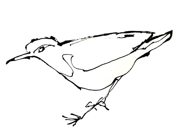bird-sketch-close-up