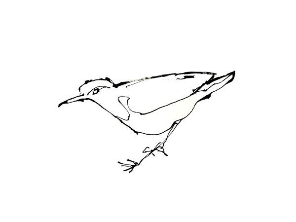 bird-sketch