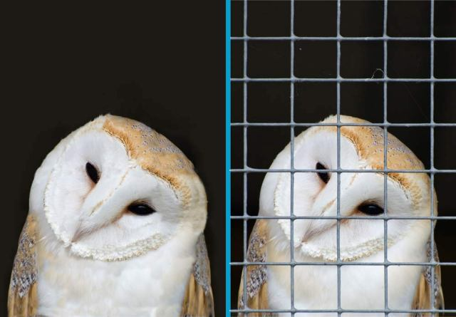owl-before-and-after