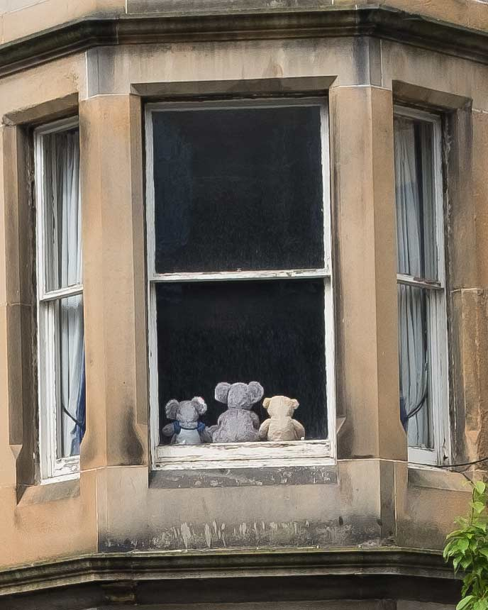 animals-in-the-window