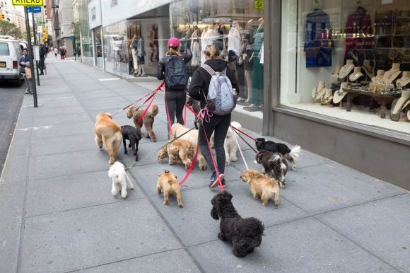 dog walkers and dogs in manhattan