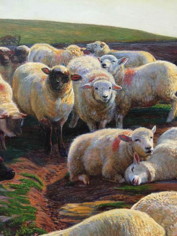 sheep-detail-01-whh