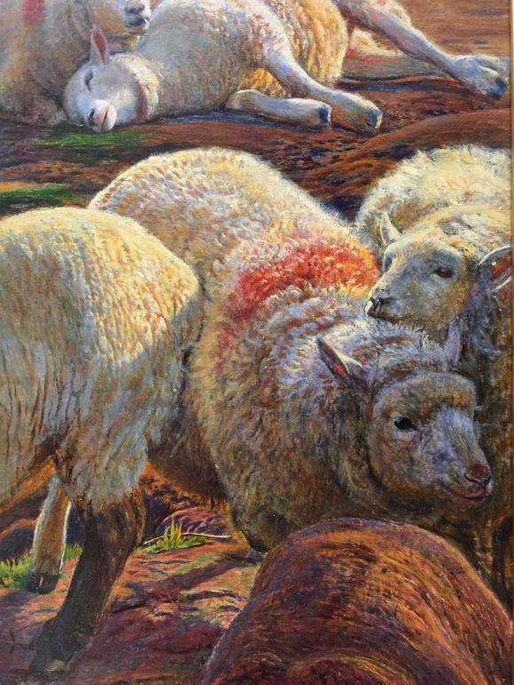 sheep-detail-02-whh