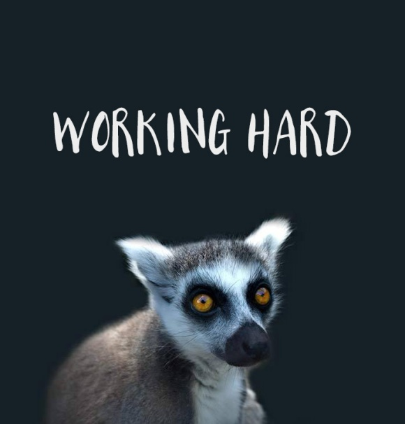lemur and text 'Working Hard'