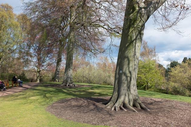 Trees In The Royal Botanic Garden Edinburgh