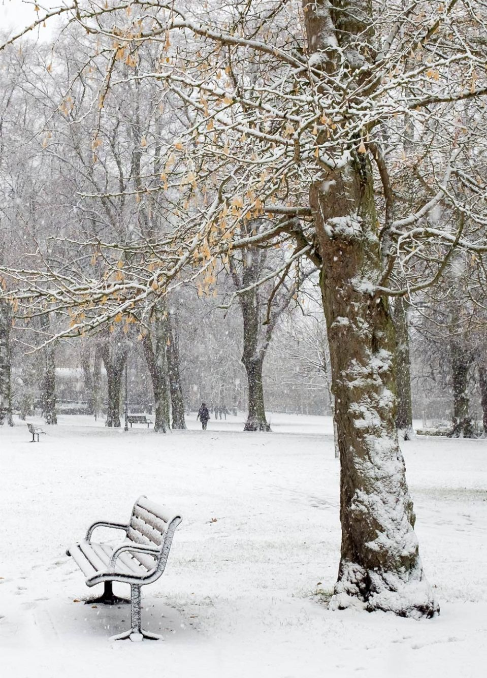 bench and tree in snow in Cambridge 10 December 2017