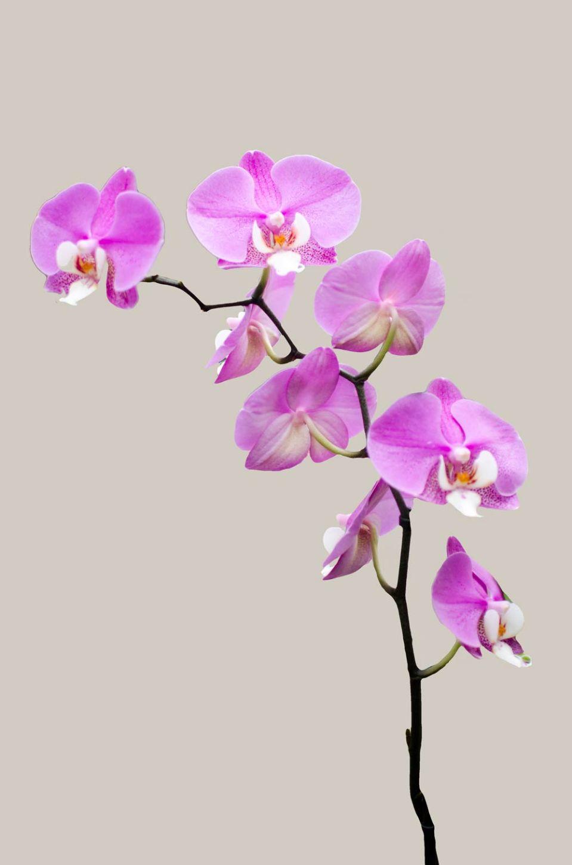 orchid at Cambridge Botanic Garden