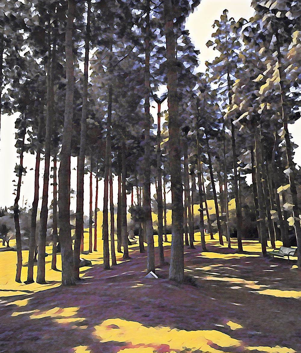Grove of trees in shade