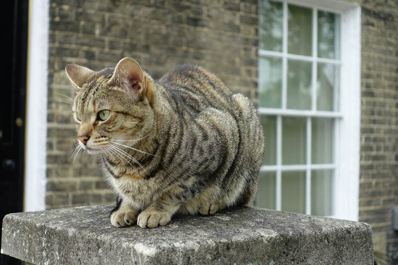 tabby cat sitting on a wall