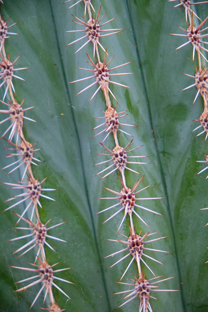 spiky cactus