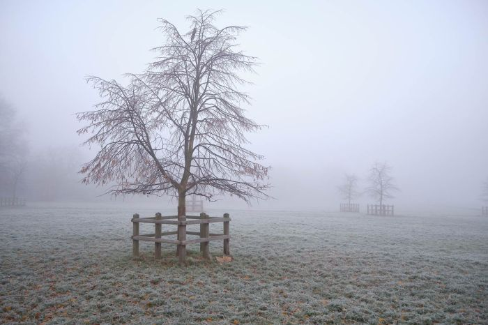 fenced trees in the mist in Cambridge