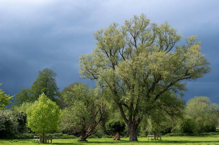 approaching rain clouds behind trees on Coe Fen in Cambridge