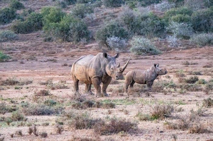 rhino adult and child